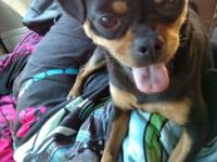 I have a 3yr old female mini rott (pugly min pin) for