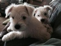 These two little guys need their new loving homes. They