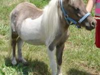JTR Merry is a wonderful mare. She has adorable small