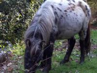 I have 3 miniature horse for sale. One is a beautiful