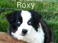Roxy X Deakin litter is due approx May 13th. We will