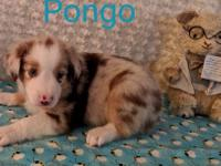 Pongo is a playful and fun little guy with loads of