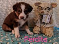 Perdita is a beautifully marked tiny little girl. She