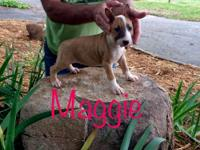 Maggie is a beautiful puppy! She is dark red/fawn and