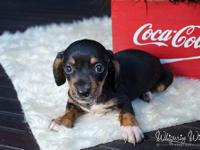 We are a breeder of Miniature Dachshunds located in