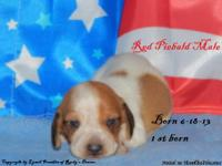 We have new AKC petregistered puppies available.
