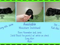 This stunning little boy is midnight jet black with a