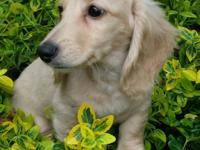 Harry is eecream gorgeous puppy.12 weeks.