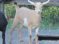 We have several spring doelings for sale. They are