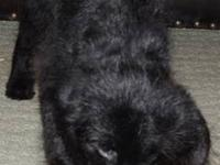 REDUCED PRICE! ---- 3 Puppies Left From Litter of 12.