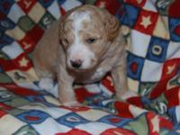 Young puppies will certainly prepare @ 8 weeks over New
