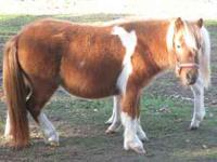 I have a nice female miniature horse for sale. Price is