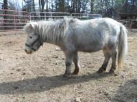 Miniature Horse - Peanut - Small - Adult - Female -