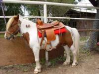 Mini horse or small pony training: The cost is $250.00