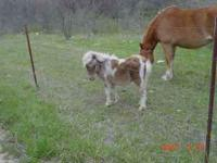 We have two miniature mares, 2 years old and 3 years