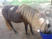 We have two miniature horses. We have a paint mare that