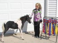 We are offering our miniature horse herd for sale. We