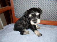 this little guy will be ready for his new home Oct 16