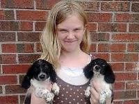 We have two lovely female black piebald longcoat mini