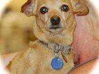 Miniature Pinscher - Horton - Small - Adult - Male -