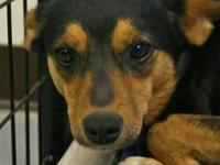 Miniature Pinscher - Lucy (fostered @ Dogtopia) (mama