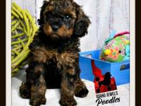 """Mason"" is AVAILABLE DOB: February 9 Black & Red wild"