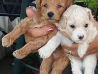 We have two male and two female pups available for