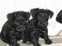 I have 2 little boys they will be up to date on shots