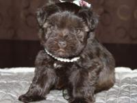 This sweet little lady is Brownie. She would make an