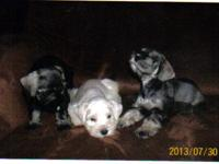 These three pups are looking for a loving home. They
