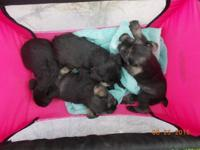 we have 3 puppies 2 females and one male, 1st shots and