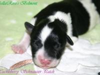 BellaRose & Ryder had 3 puppies on the 15 of June. All