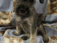 Edit: We just have the female Schnauzer left. This