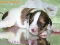 Sangria had 7 young puppies on Jan. 28, 2015. There are