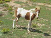 I have a heard of Miniature horses for sell. I have a