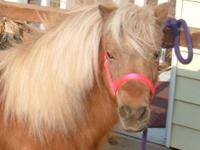 Miniature Horse - Mr. Lucky - Small - Adult - Male -