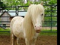 Miniature Horse - Peppermint Patty - Small - Adult -