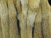 A GREAT CHOICE OF FUR COATS WE HAVE. COYOTE LAYER