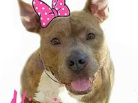Minnie's story Minnie is not a Pit Bull she is an