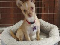 Minnie came to us as an owner surrender. She is a 6