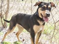 Minnie is a 6 month old female shepherd mix.  She is a