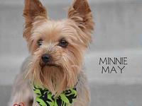 Minnie May - no longer accepting applications's story