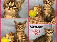Minor's story Minor is a playful little love bug who