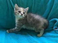 Minuette18's story All Purr Partners Adoptable