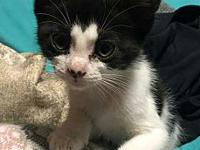 Minxie's story This sweet group of tuxedo wearing