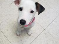 My story Hi there, My name is Mira! I'm a super sweet