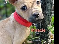 Miracle's story Welcome our little island baby,
