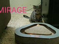MIRAGE's story MIRAGE is a cute little grey tabby. She
