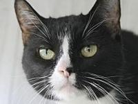 Misha's story Meet Partners for Pets' adoptable cats at