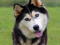 Miska's story You can fill out an adoption application